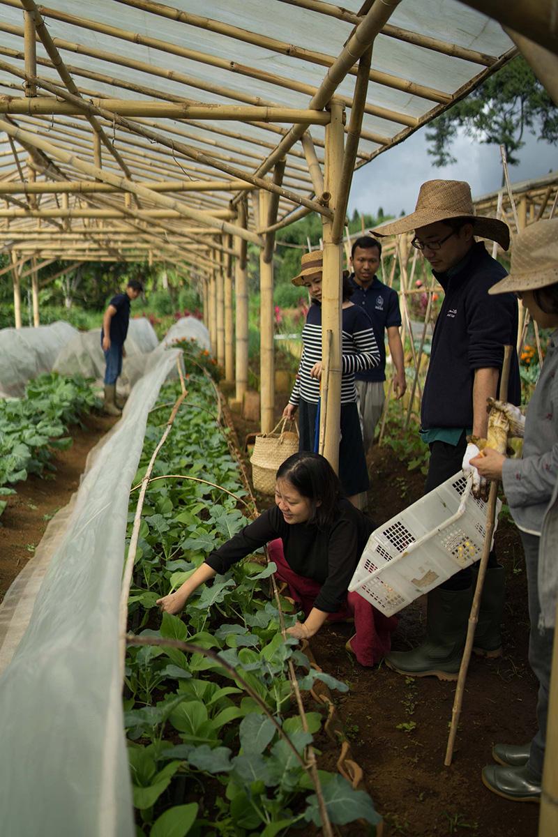 畑,収穫,ジャカルタ,自然